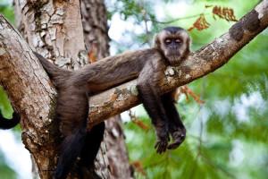 Os primatas terão uma estrutura de passagem sobre a LMG 760 para evitar acidentes