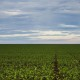 Segundo a Conab, a estimativa é colher 245,8 milhões de toneladas de grãos na safra 2019/2020
