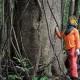 911175-manejo florestal (1) (1)