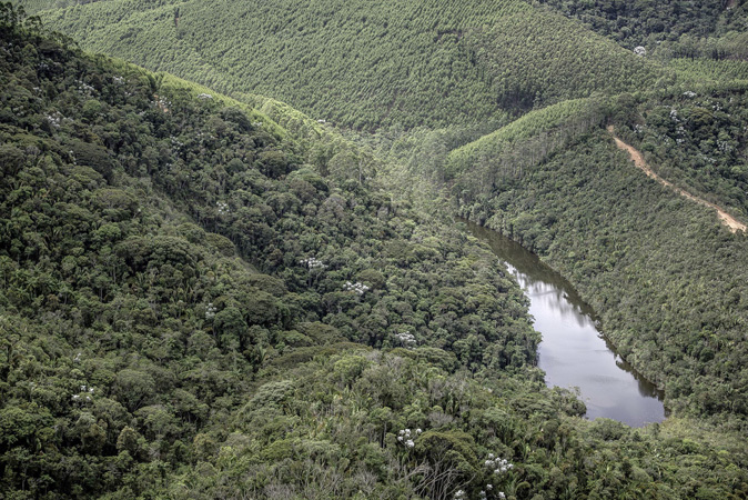 Floresta cocais Cenibra (1)