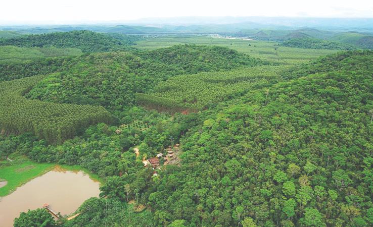 Cuidados da CENIBRA com o meio ambiente preservam matas nativas e previnem incêndios